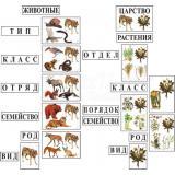 Модель-аппликация Классификация растений и животных