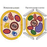Модель-аппликация Строение клетки (двухслойная)